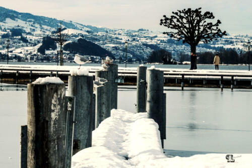 Schiffsteg im Winter Rapperswil